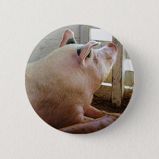 Pig Enjoying the Sun 2 Inch Round Button