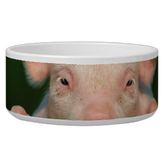Pig farm - pig face