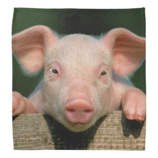 Pig farm - pig face bandana