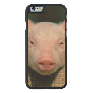 Pig farm - pig face carved maple iPhone 6 case