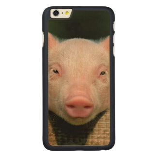 Pig farm - pig face carved maple iPhone 6 plus case