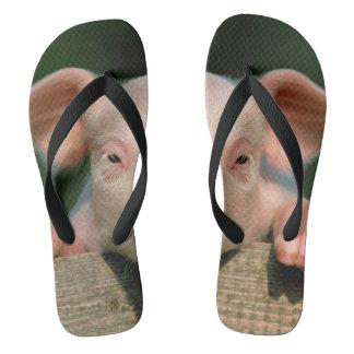 Pig farm - pig face flip flops
