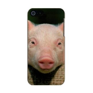 Pig farm - pig face incipio feather® shine iPhone 5 case