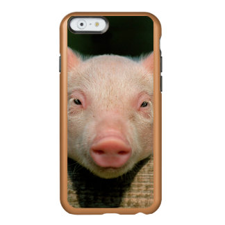 Pig farm - pig face incipio feather® shine iPhone 6 case