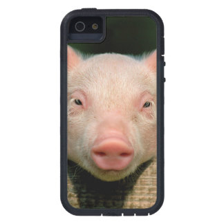 Pig farm - pig face iPhone 5 covers