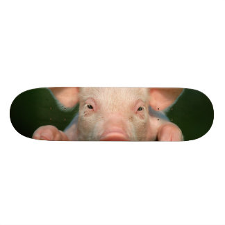 Pig farm - pig face skate board deck