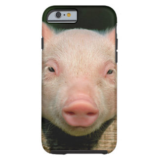 Pig farm - pig face tough iPhone 6 case