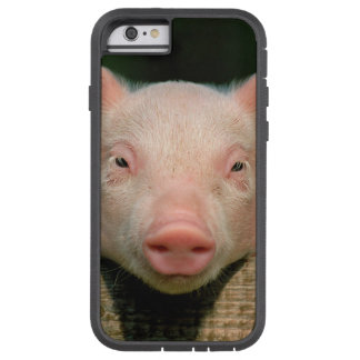 Pig farm - pig face tough xtreme iPhone 6 case