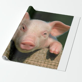 Pig farm - pig face wrapping paper