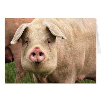 Pig had card