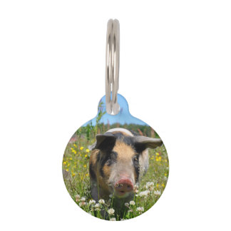 Pig in the Nature Pet Tag