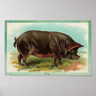 Pig Poster - Vintage Art
