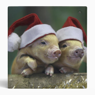 Pig santa claus - christmas pig - three pigs binder