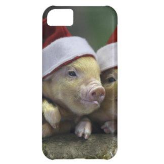 Pig santa claus - christmas pig - three pigs iPhone 5C covers