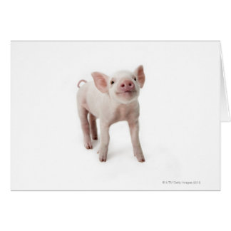 Pig Standing Looking Up Card