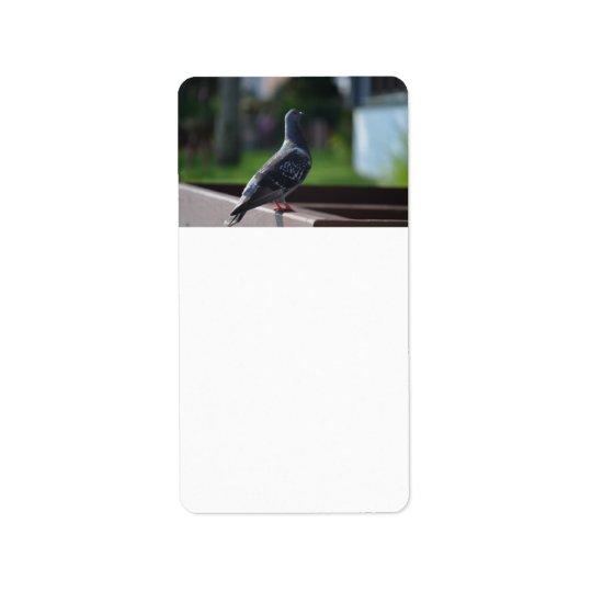 pigeon bird feather animal creature