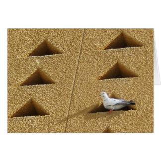 Pigeon Card