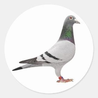 pigeon design classic round sticker