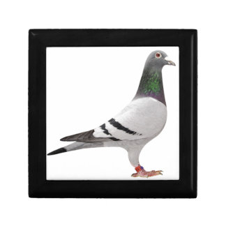 pigeon design gift box