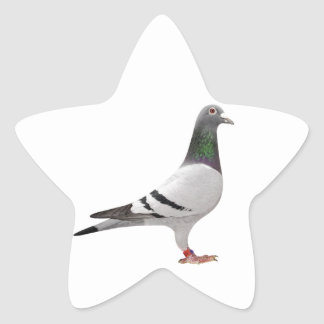 pigeon design star sticker