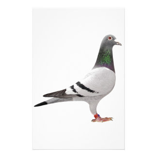 pigeon design stationery