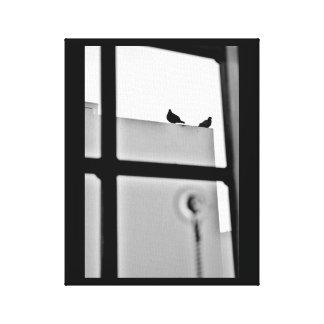 Pigeon Drama Canvas Print