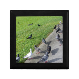 pigeon family reunion.JPG Jewelry Boxes