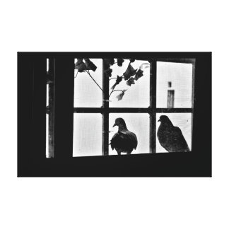 Pigeon Friends Canvas Print