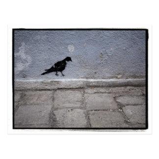 Pigeon Graffiti Postcard