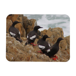Pigeon Guillemots Flexible Photo Magnet