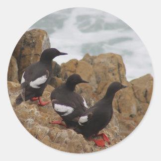 Pigeon Guillemots Stickers