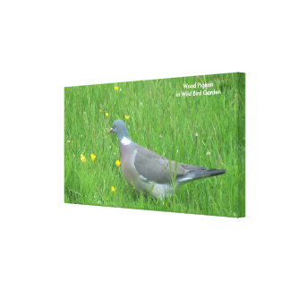 Pigeon image for Canvas Prints