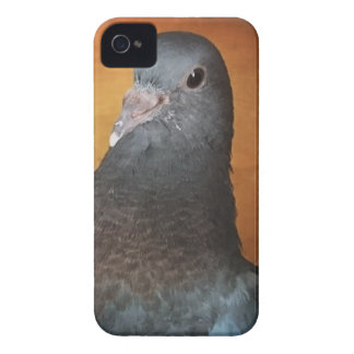 Pigeon iPhone 4 Cover
