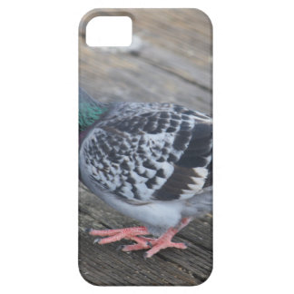 Pigeon iPhone 5 Covers