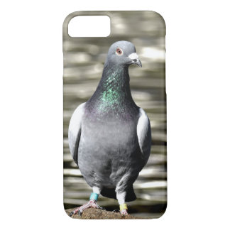 Pigeon iPhone 8/7 Case