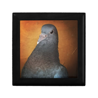 Pigeon Jewelry Boxes