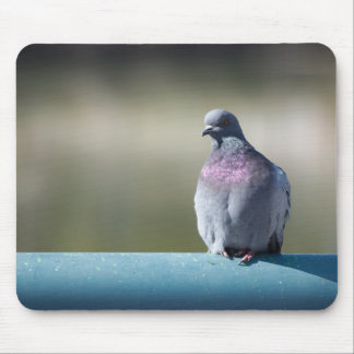 Pigeon Mouse Pad