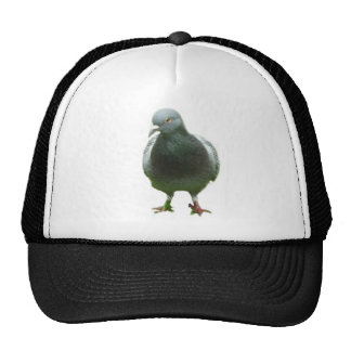 Pigeon on a hat