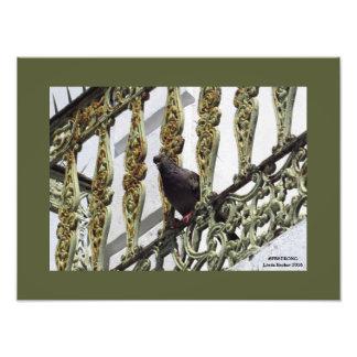 Pigeon on Ironwork in Old San Juan Photo Print