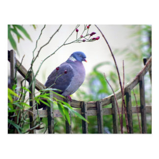 pigeon on the fence Card