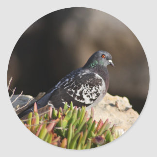 Pigeon perched on a cliff ledge round sticker