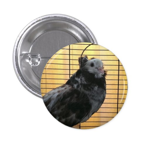 pigeon pin/button