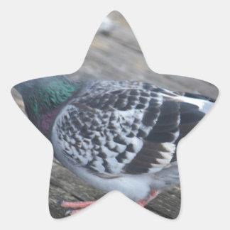 Pigeon Star Sticker