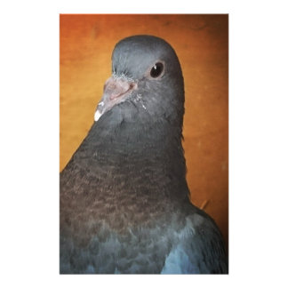Pigeon Stationery
