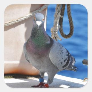 Pigeon voyageur sticker carré