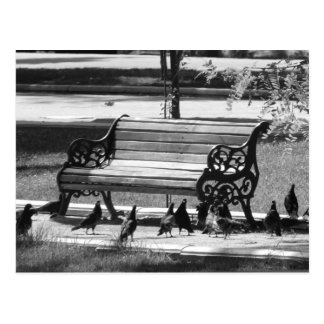 Pigeons at Empty Park Bench Postcard