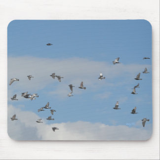 Pigeons in Flight mousepad   © Angel Honey, 2009