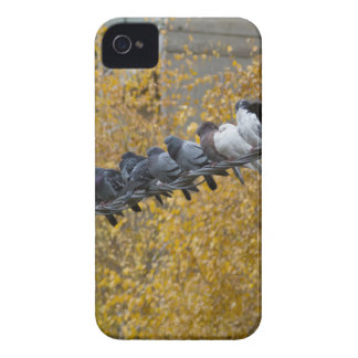 Pigeons iPhone 4 Cover