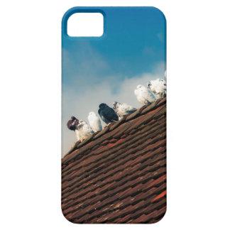 Pigeons iPhone 5 Cases