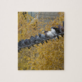 Pigeons Jigsaw Puzzle